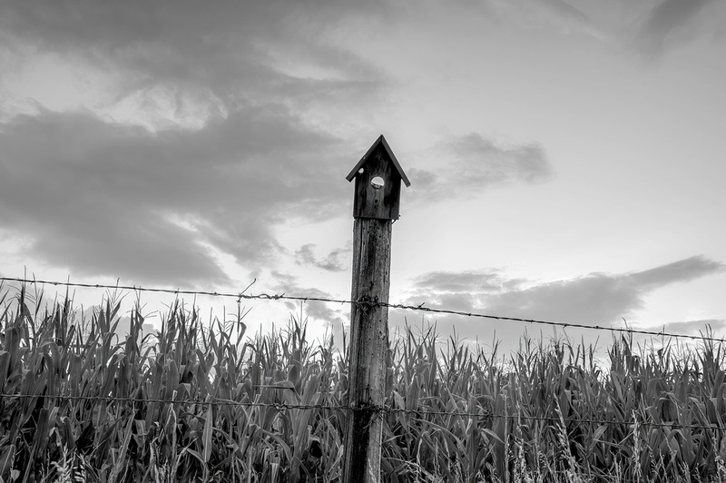 Birdhouse fencepost, northern CO